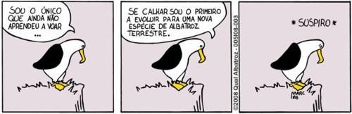 albatrozes-003_96p