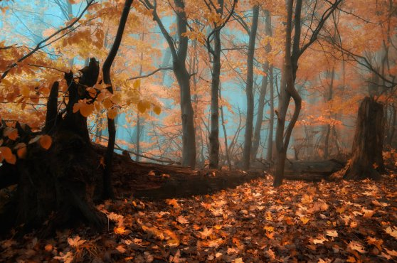 _quiet_blues_of_fallen_leaves__by_janek_sedlar-d5jjmoj