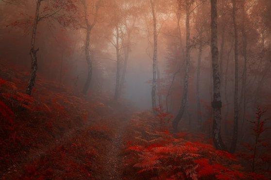 _road_into_my_heart__by_janek_sedlar-d5iei74