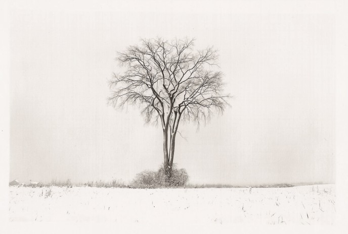 american_elm_winter_1994_ma_1-688x464